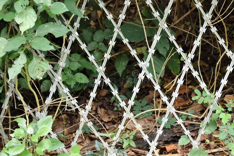 Rugged razor fence. Razor wire overgrown by vegetation at Burman bush in Durban royalty free stock photography
