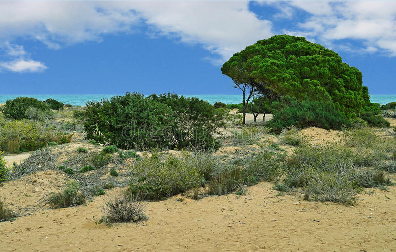 A Rugged Sandy Beach With Green Trees And Blue sky stock images