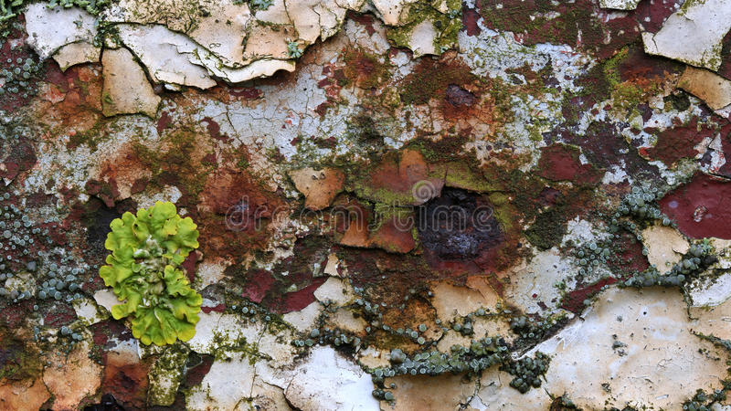 Ruggine, lichene e pittura a fiocchi immagine stock libera da diritti