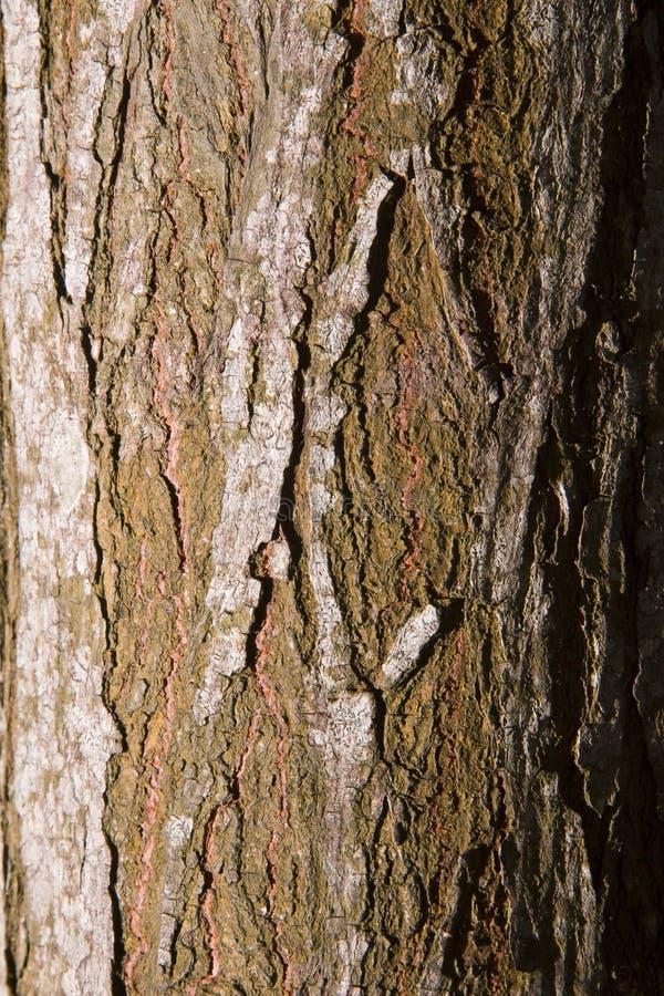 Ruggish et Rusty Tree Trunks Texture photo libre de droits
