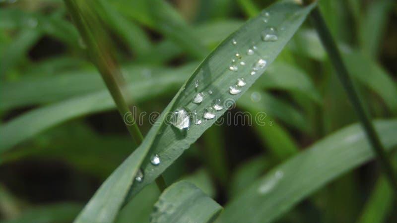 Rugiada d'argento su erba fotografia stock
