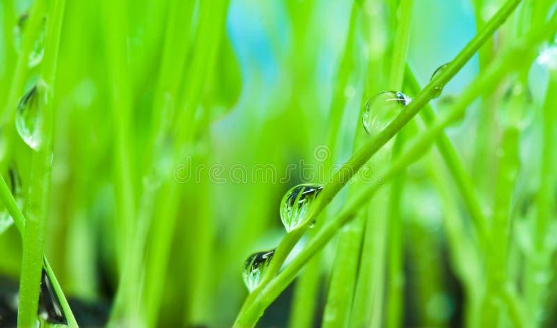 Rugiada del primo piano sulla priorità bassa dell'erba verde immagine stock libera da diritti