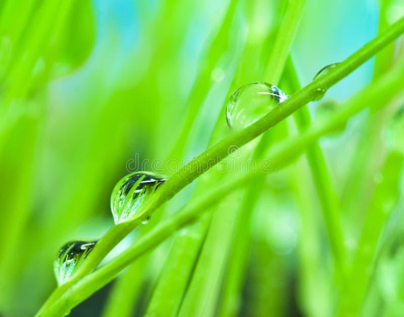 Rugiada del primo piano sulla priorità bassa dell'erba verde fotografie stock libere da diritti