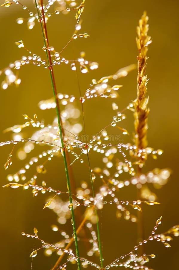 Rugiada di mattina su erba fotografie stock libere da diritti