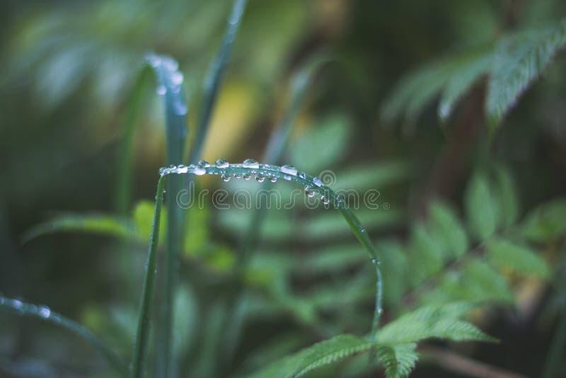 Rugiada di mattina su una lama di erba immagini stock libere da diritti