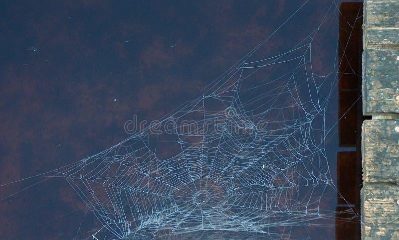 Rugiada di Web di ragno fotografia stock libera da diritti