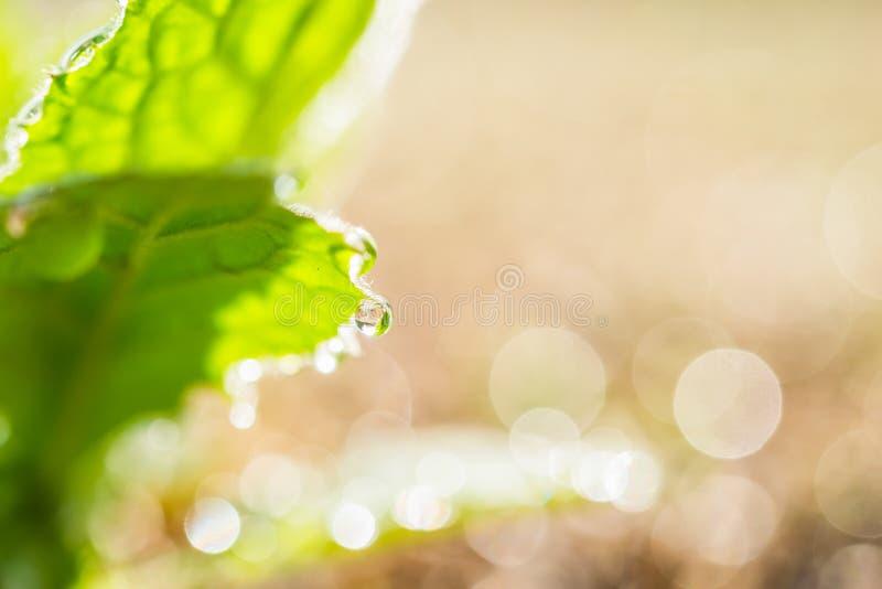 Rugiada sul foglio verde fotografia stock libera da diritti