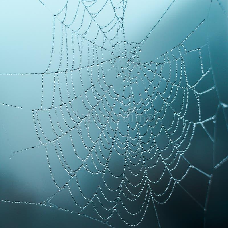 Rugiada sul web un giorno nebbioso, fuoco selettivo, toni freddi, fondo fotografia stock