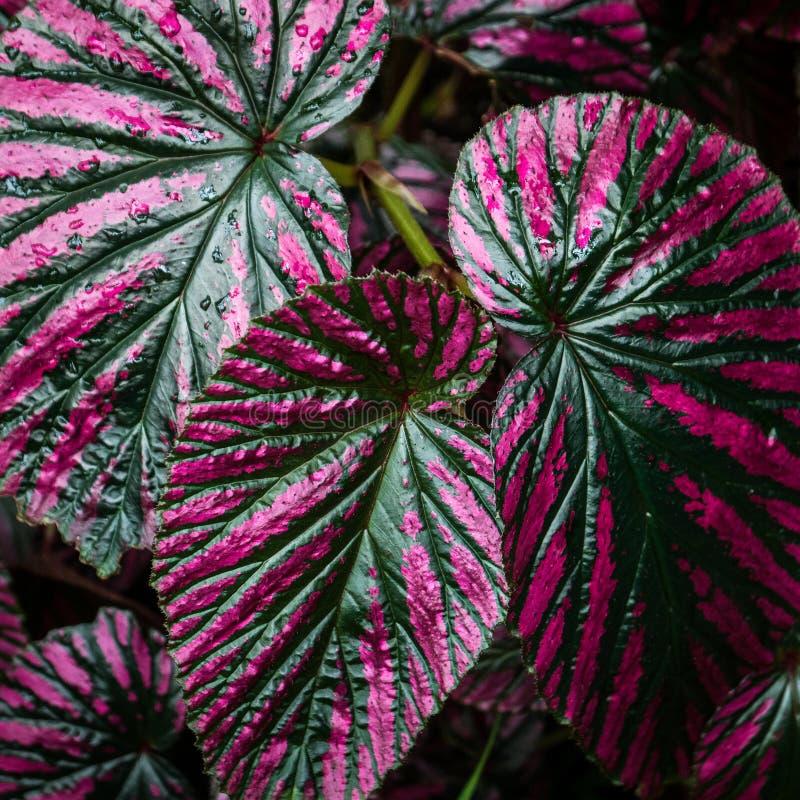 Rugiada sulle foglie - primo piano immagini stock