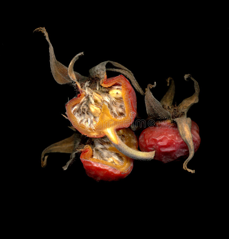 Rugosa Rose hips royalty free stock photography