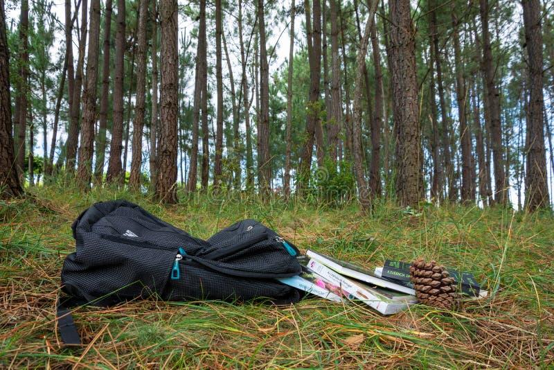 Rugzak in een pinetreebos met bools royalty-vrije stock afbeeldingen