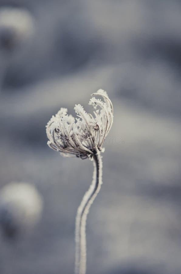 Ruhe der Winterblume lizenzfreie stockbilder