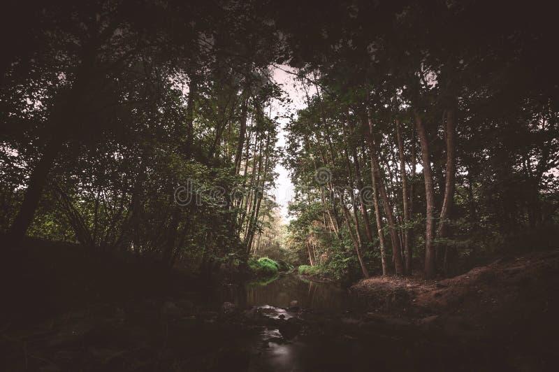 Ruhe - Naturreservat stockfoto