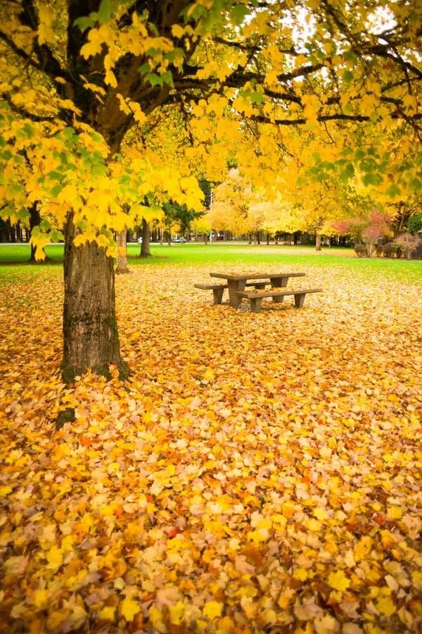 Ruhezone-Picknicktisch Autumn Nature Season Leaves Falling stockfotos