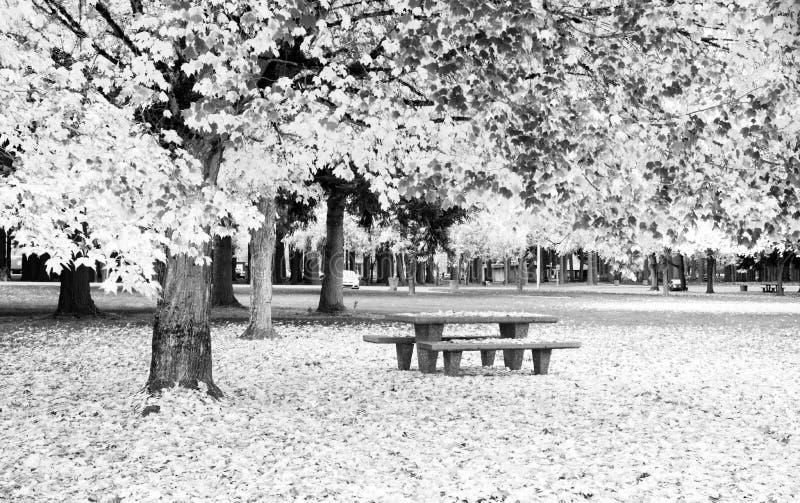 Ruhezone-Picknicktisch Autumn Nature Season Leaves Falling lizenzfreies stockbild