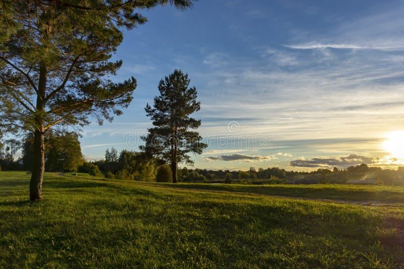 Ruhige Abendhimmelwolken und einsame Kiefern stockfotografie