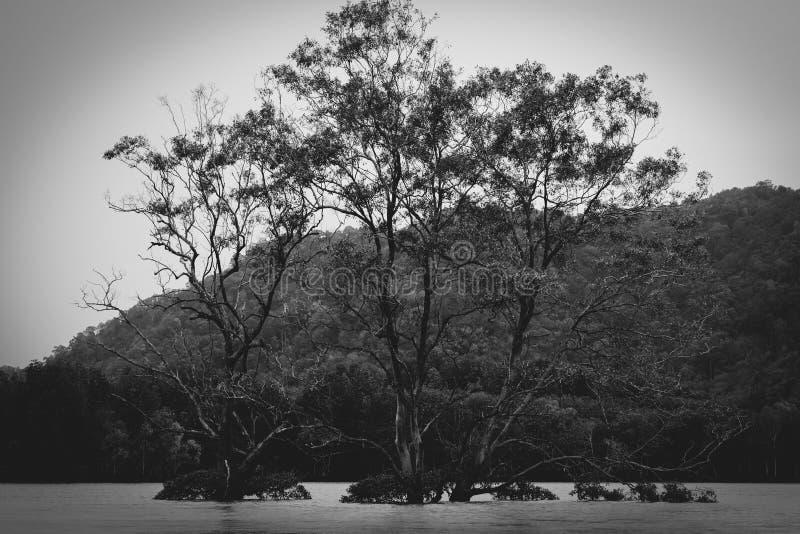 Ruhige Bäume im Fluss stockfoto