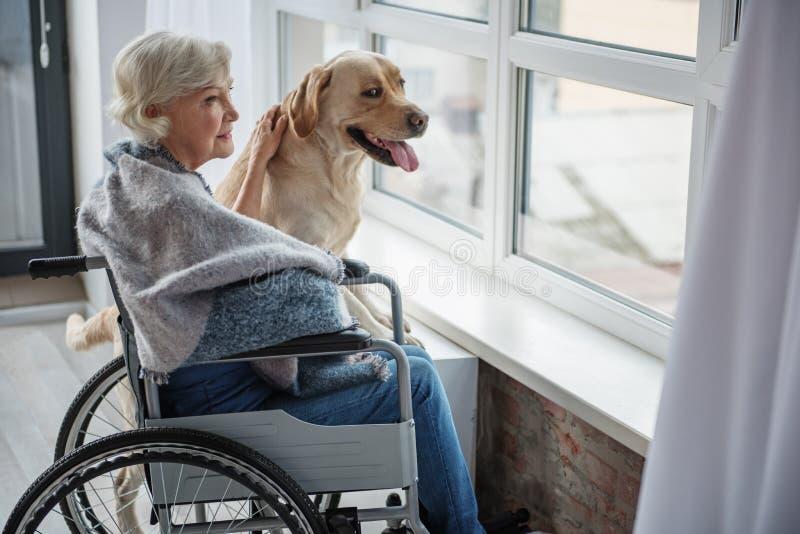 Ruhige behinderte reife weibliche genießende Zeit mit Hund lizenzfreies stockfoto