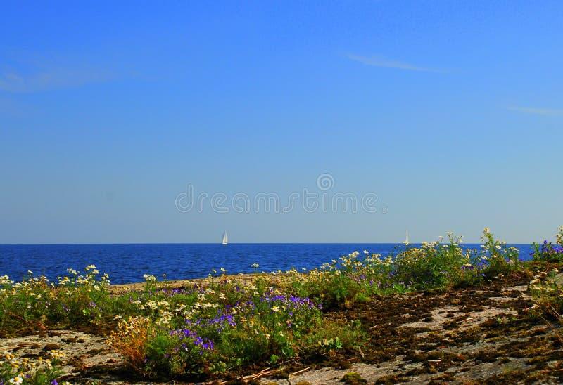 Ruhige felsige Küste mit Blumen stockbild