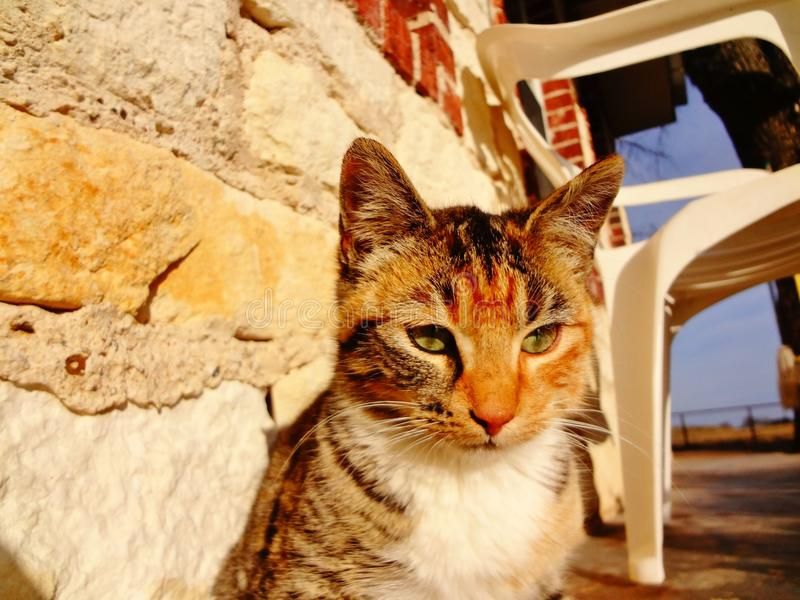 Ruhige Katze stockfotos