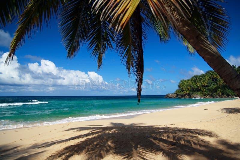 Ruhige Palme auf karibischem Strand mit weißem Sand lizenzfreies stockbild