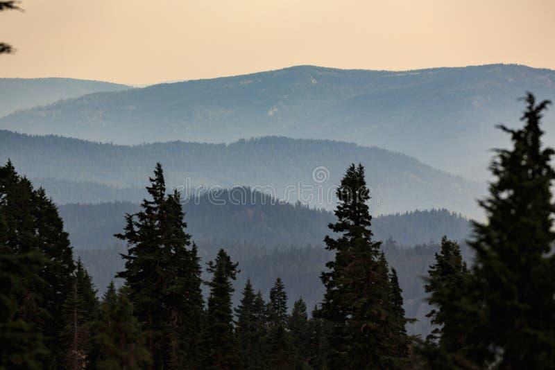 Ruhige, schöne Ansicht des Kaskaden-Gebirgszugs gestaltet durch Kiefer bei Sonnenuntergang lizenzfreie stockbilder