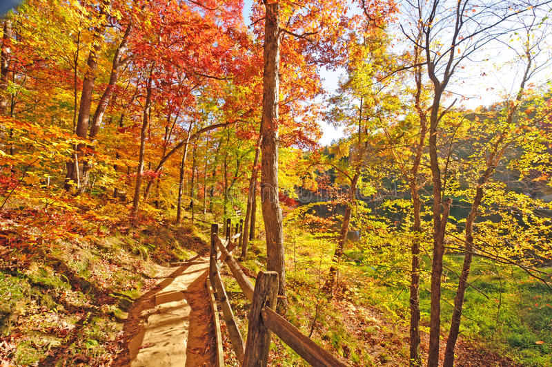 Ruhige Spur durch Fall-Waldfarben stockfoto