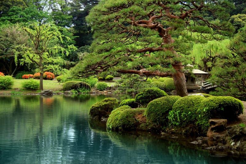 Ruhige Zen See- und bonzaibäume