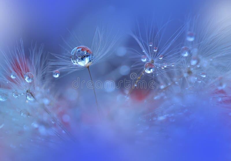Ruhiger abstrakter Nahaufnahmekunsthintergrund Abstraktes Makrofoto mit Wassertropfen Kunstphotographie Unten vom Löwenzahn stockfotografie