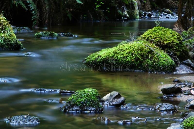 Ruhiger Fluss lizenzfreies stockfoto