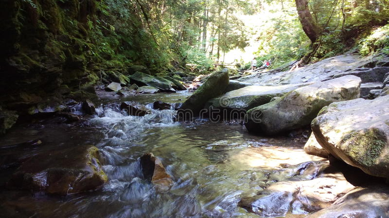 Ruhiger Fluss im Wald lizenzfreie stockbilder