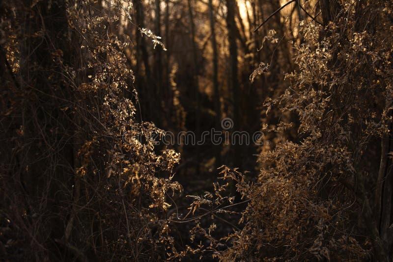 Ruhiger goldener Wald lizenzfreie stockfotografie