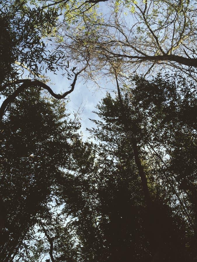 Ruhiger Himmel stockbild
