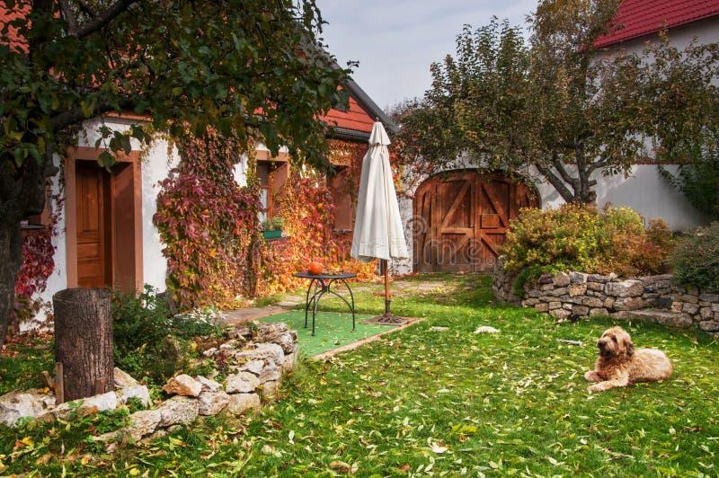 Ruhiger ländlicher veränderter Herbstgarten mit Hund lizenzfreies stockbild