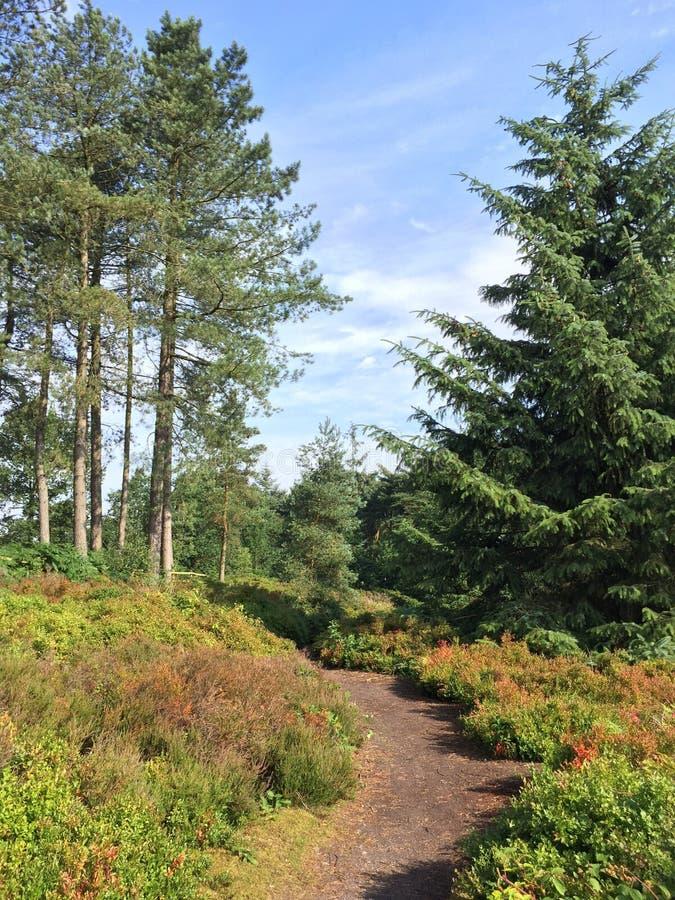 Ruhiger Morgen auf Cofton-Hügel unter den Heidelbeeren stockbild