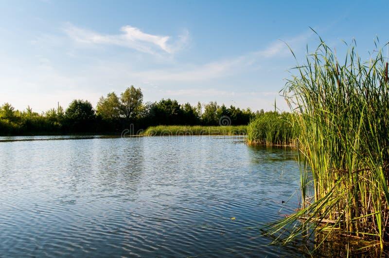 ruhiger Morgen auf dem ruhigen und schönsten See lizenzfreie stockfotos