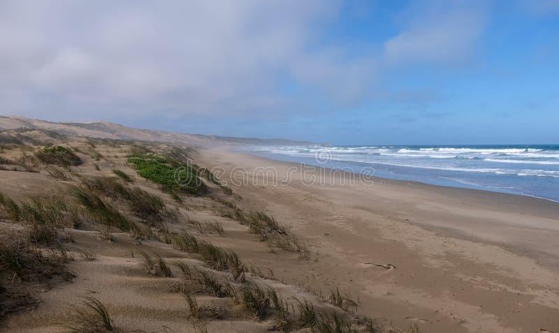 Ruhiger sandiger Strand und grasartige Dünen auf der Austernfischer-Spur, nahe Mossel-Bucht, Garten-Weg, Südafrika lizenzfreie stockbilder