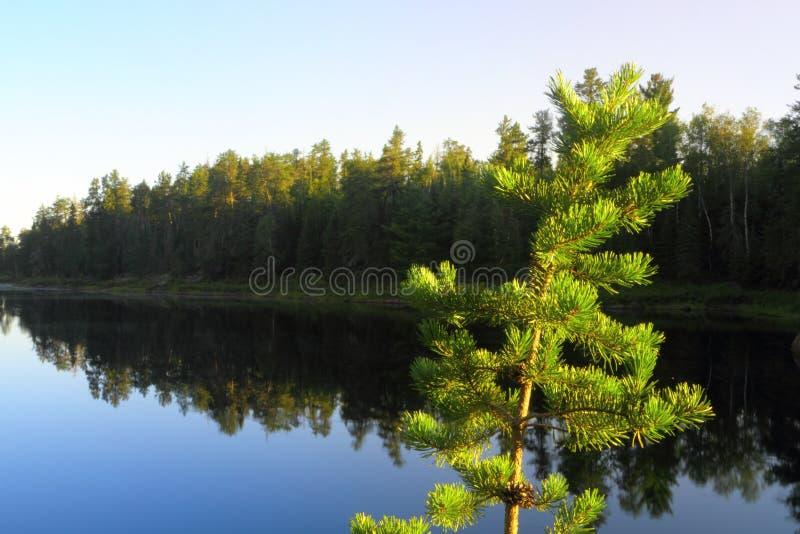 Ruhiger See stockbilder