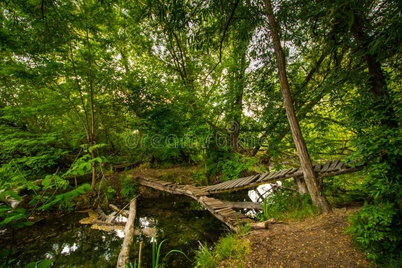 Ruhiger Steg im grünen Wald stockbild