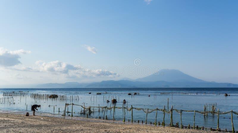 Ruhiger Strand und Meerespflanze bewirtschaften mit dem Gunung Agung Volcano im Hintergrund in Nusa Penida, in Bali, Indonesien stockfotografie