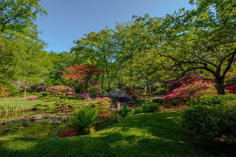 Ruhiger und ruhiger japanischer Garten in Clingendael, Den Haag, die Niederlande lizenzfreies stockfoto