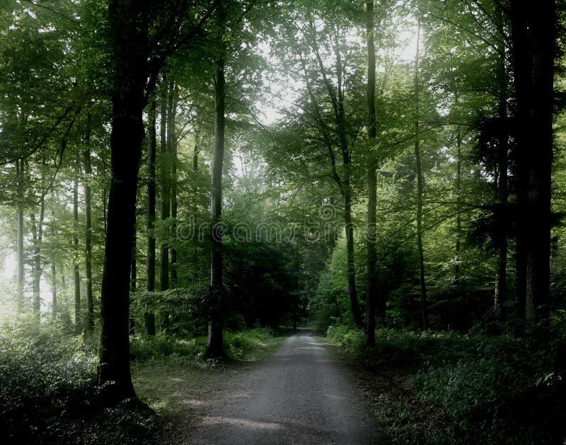 Ruhiger Wald stockfotografie