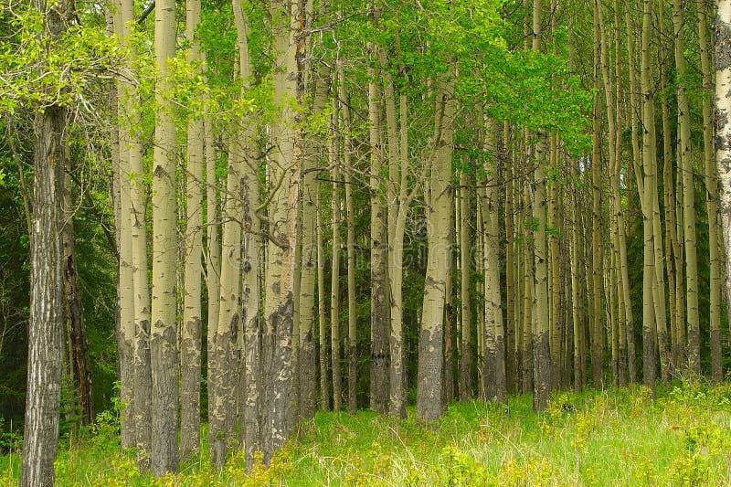 Ruhiger Wald stockbild