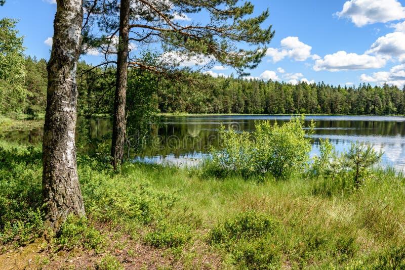 ruhiger Waldsee und -bäume stockbilder