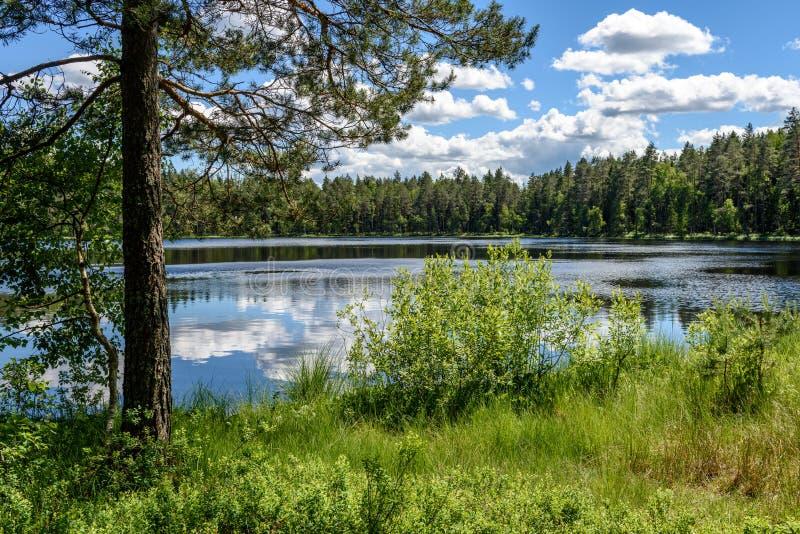 ruhiger Waldsee und -bäume lizenzfreie stockfotografie