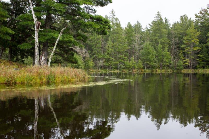Ruhiger Wilderness See lizenzfreie stockfotos