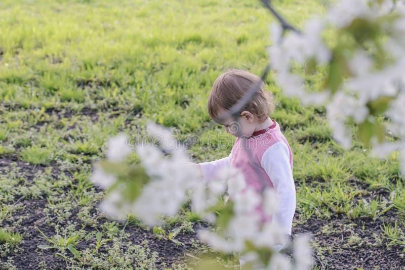 Ruhiges Kind, das auf einer grünen Wiese unter einem blühenden weißen ch spielt stockfotografie