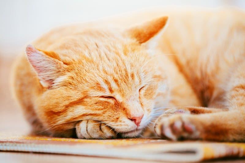 Ruhiges orange Rot Tabby Cat Male Kitten Sleeping lizenzfreie stockbilder