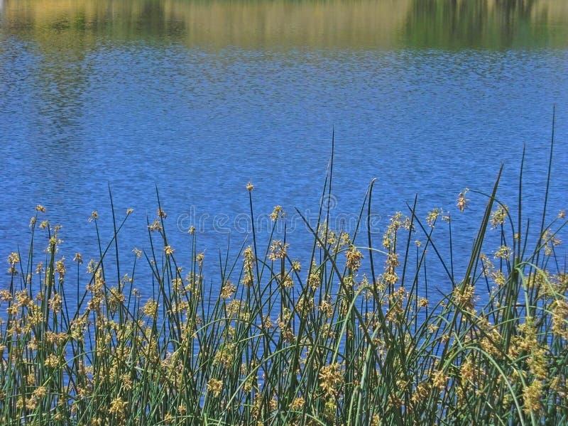 Ruhiges Waterscape lizenzfreie stockfotografie
