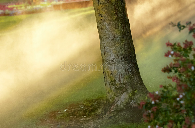Ruhmleuchte Am Wald Stockfotografie